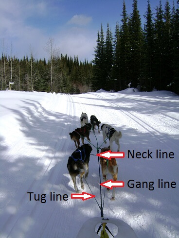 dog sledding lines