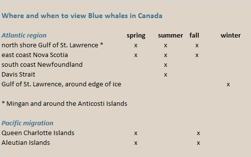 blue whales in Canada