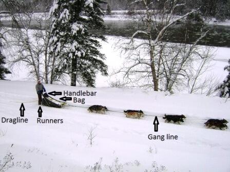 dog sledding terminology