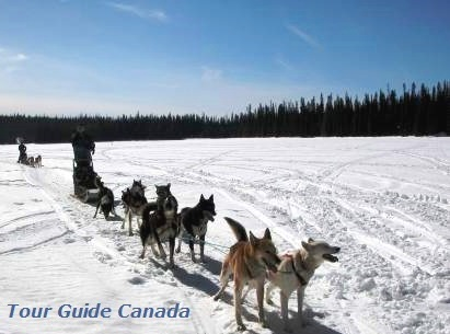 two teams are joining a dog sled trip