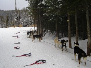 dog sledding gear