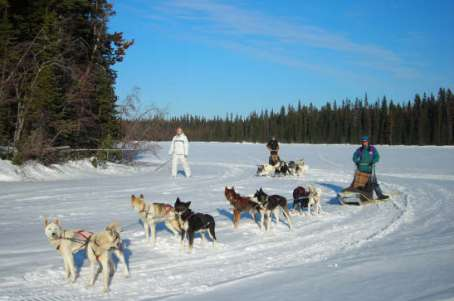 dog sledding guide
