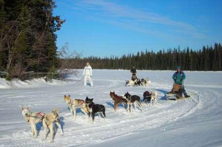 dog sledding guide