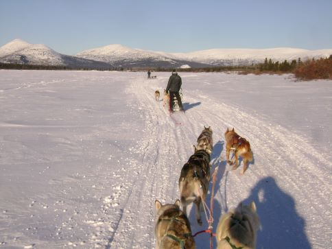 a dog sledding tour early February