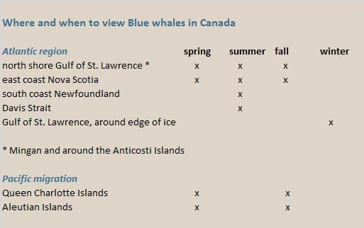 blue whales Canada