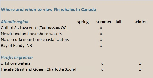 fin whales canada