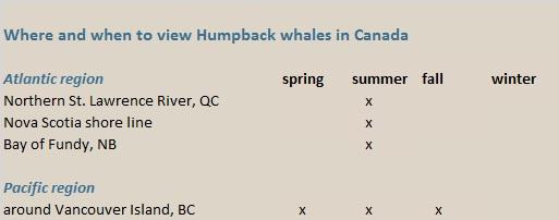 humpback whales Canada