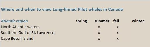 pilot whales canada