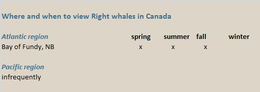 right whales canada