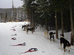 dog sledding gear