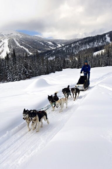 dog sledding at SunPeaks Resort