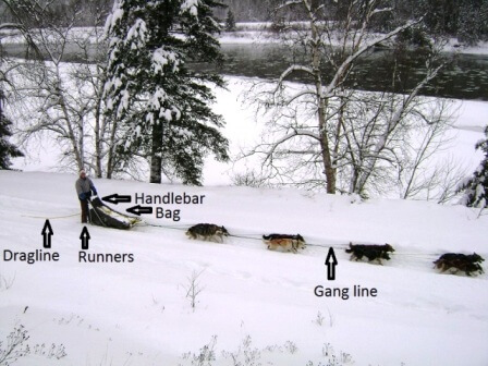 dog sledding terminology
