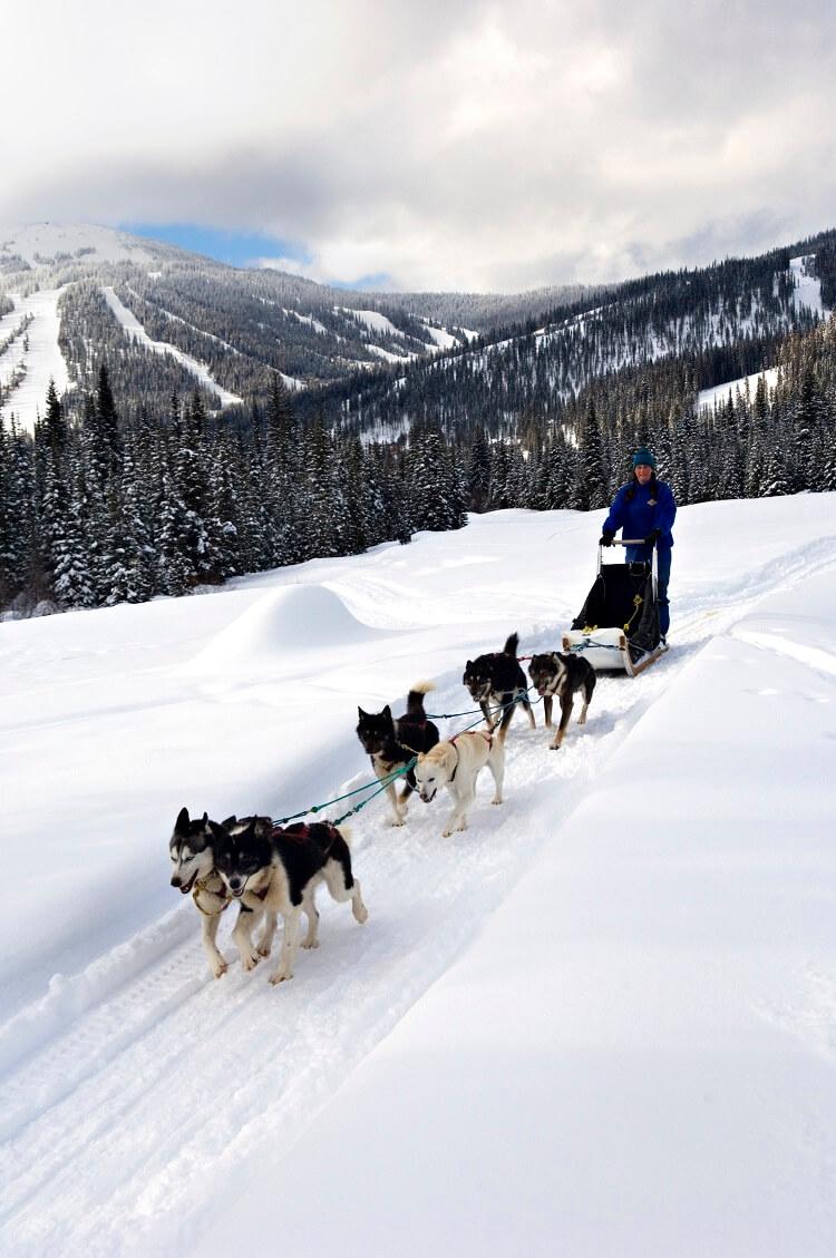 dog sledding Canada