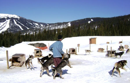 dog sledding is a hands-on experience
